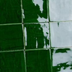 handvorm tegels donker groen